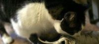 Как быстро избавиться от запаха кошачьей мочи в обуви?