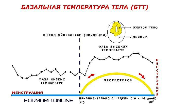 базальный график пример