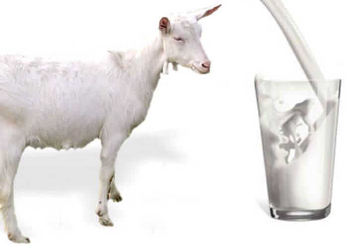 Koze-moloko