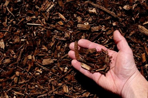 В чем секрет эффективности коры дуба при поносе?