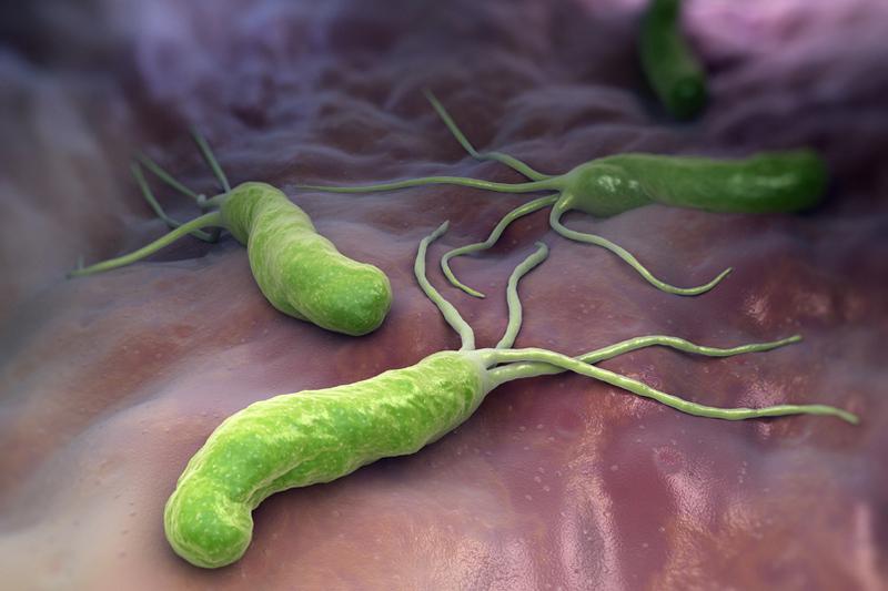 Хеликобактерия - распространенная причина заболеваний ЖКТ